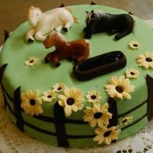 Torta kone